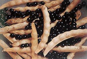 49.La alubia se popularizo durante el siglo XIX como inmejorable compañera del maiz.
