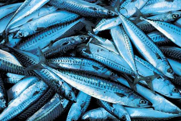 Bertan 17 l 39 poque romaine chapitre 7 la p che et les conserves de poisson - Peche du poisson chat au coup ...