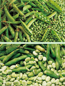 132. Peas (Pisum sativum) and broad beans (Vicia faba).© Lamia